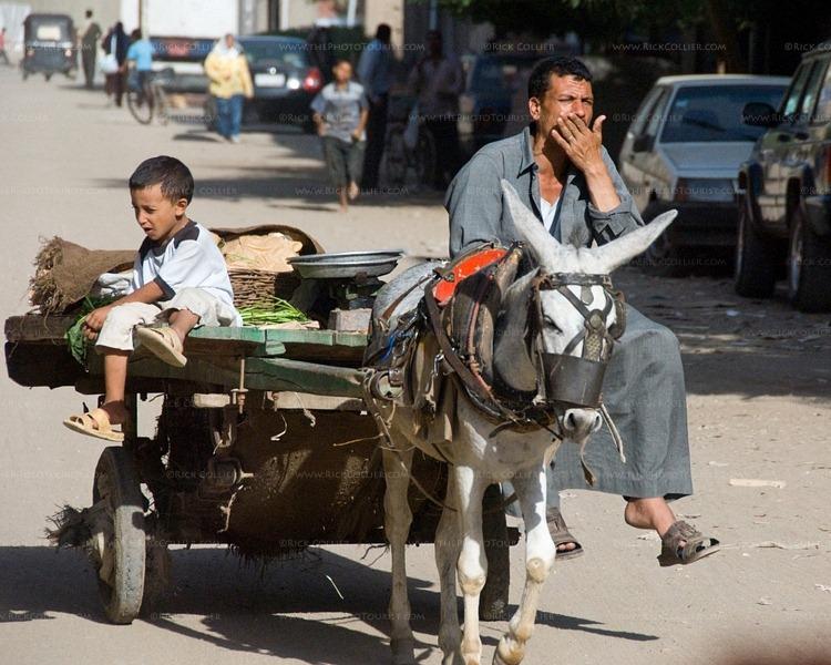 Esel in Kairo