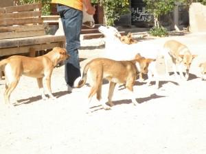 Diese Hunde dürfen bald bei Mecky Grund leben, bis sie ein neues zu Hause gefunden haben